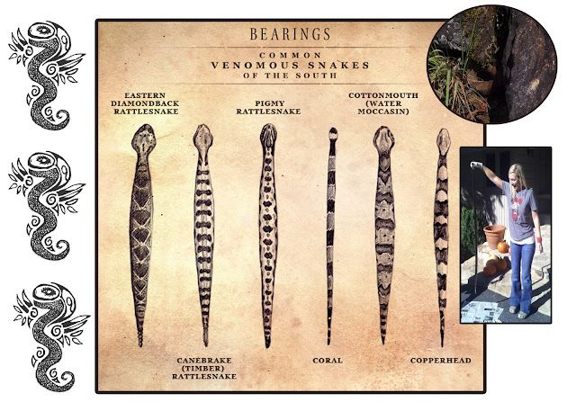 Snake Identification Chart Good To Know For When Your Gardening