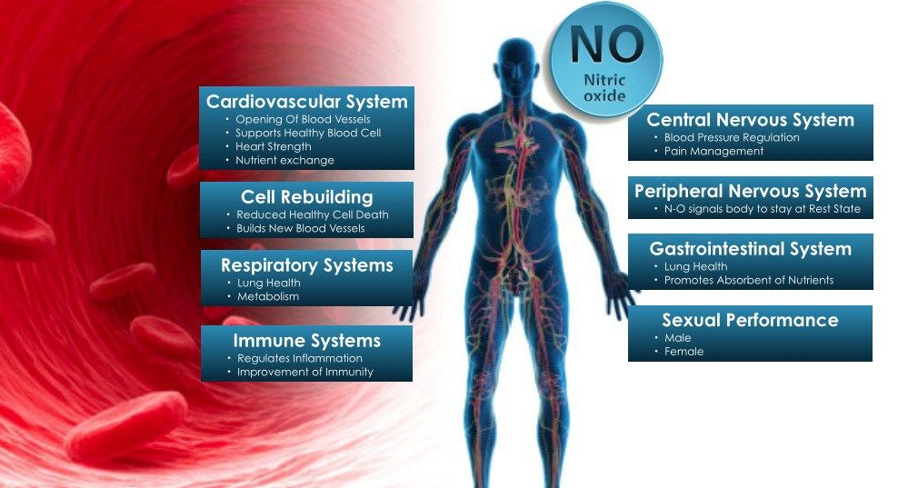 What Does Nitric Oxide Do In The Body