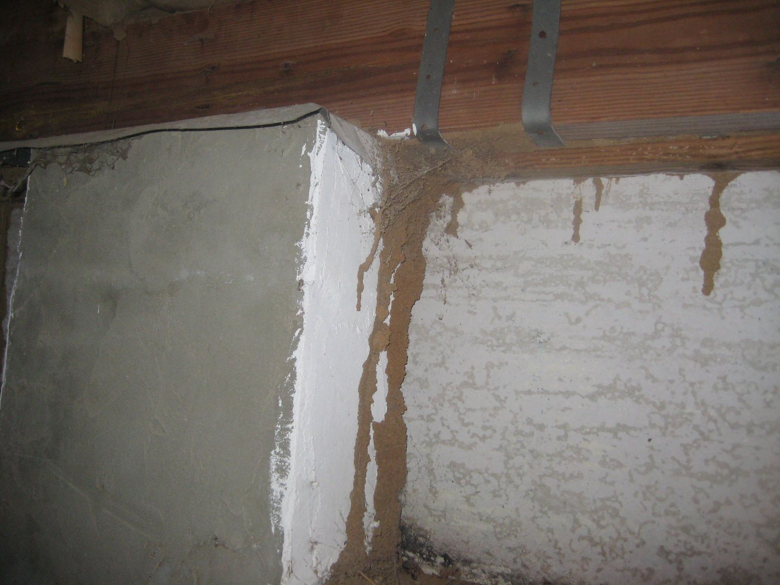 Termite Tunnel: If you spot a tunnel like this in or around your home, you will know the type of pest you are dealing with. Made of tiny sand or dirt particles and termite saliva, these pathways range in size and may appear in darkened areas of the home. Don't let the termites call the shots-- call 1st Response today at (614) 880-1073 for your pest management needs, or visit our termite page at www.1stresponse.b.... #termites #Columbus