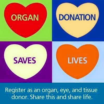 Pin by Dianne Ayers on Kidney Disease Quotes   Organ