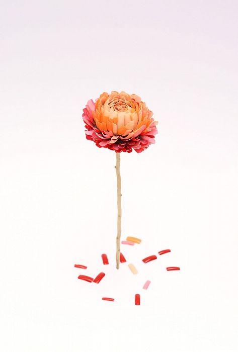 »Chrysanthema«