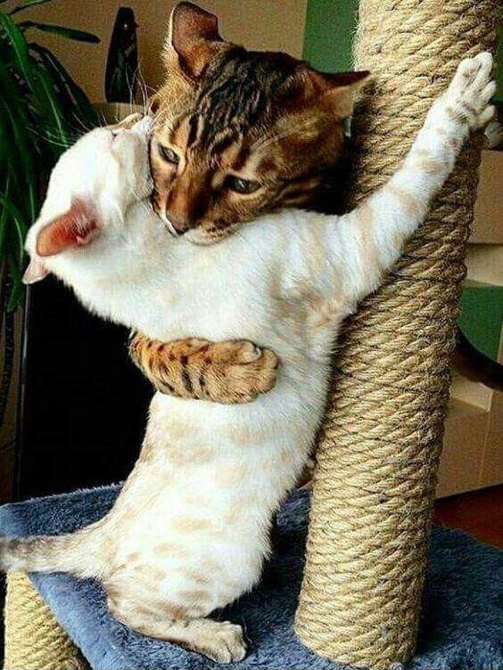 Benita Hankinson Adli Kullanicinin Cats Panosundaki Pin Cute Kittens Sevimli Kediler Komik Hayvanlar