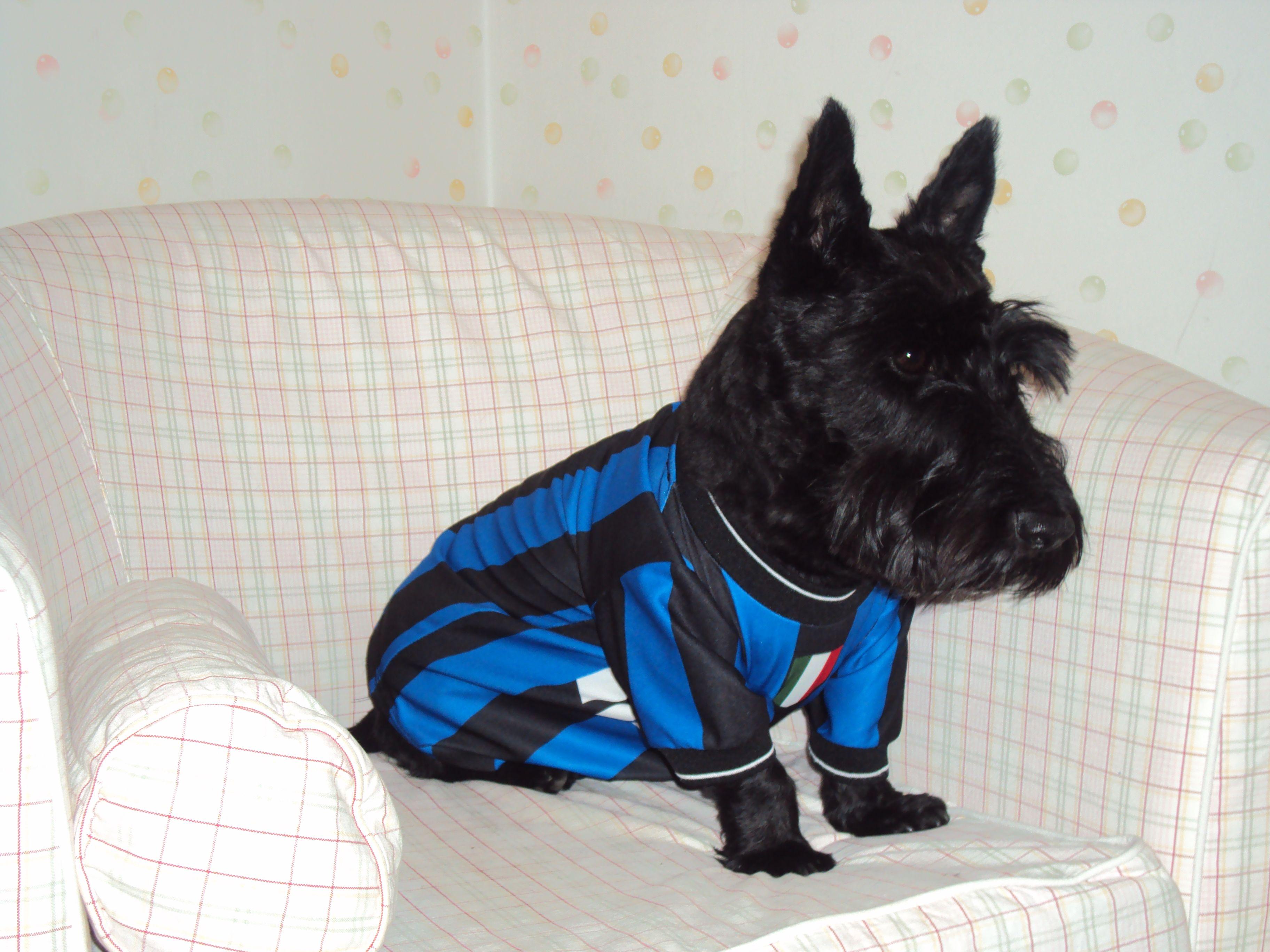 Wesley loves Inter F.C.!