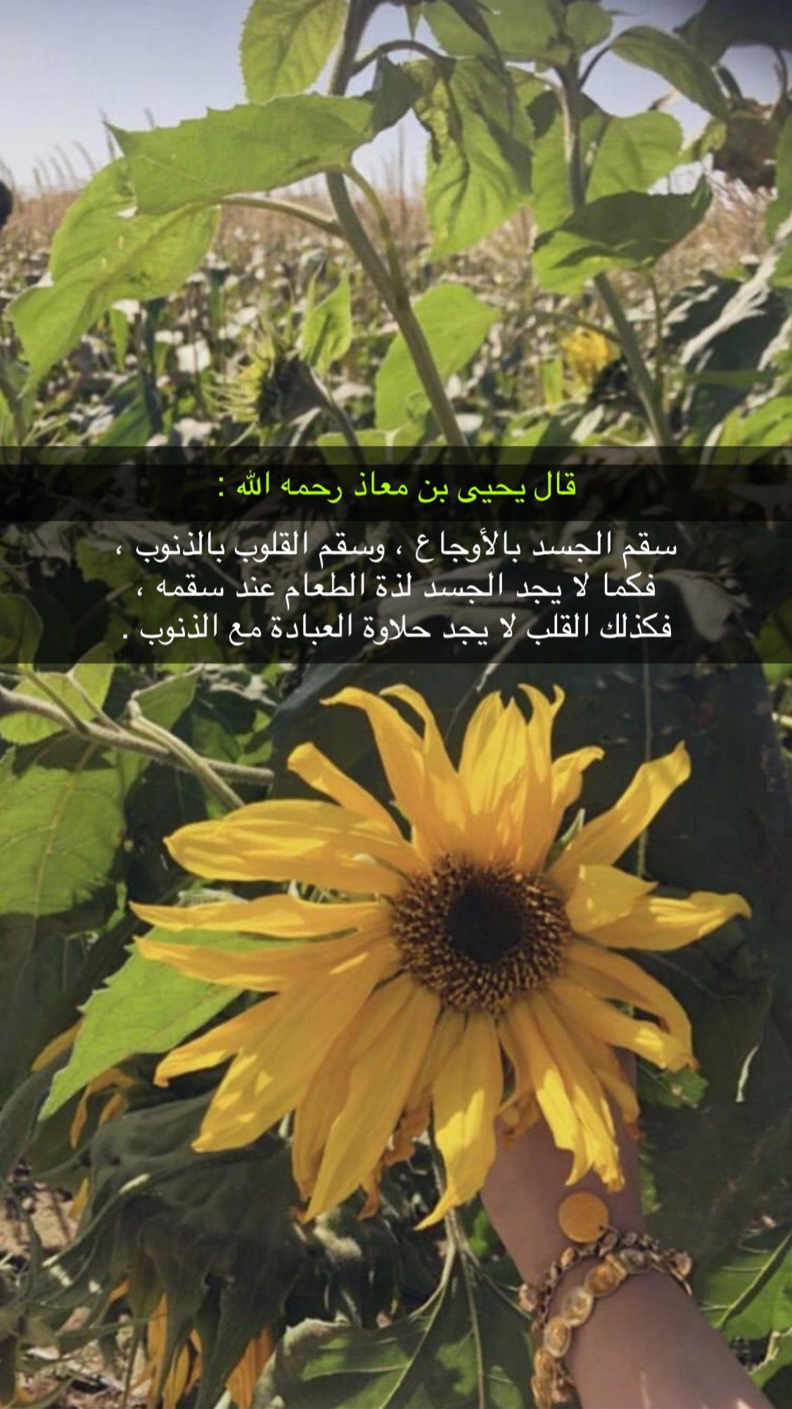 Pin By الوتين On خلفيات دينية Photo Plants Quotes
