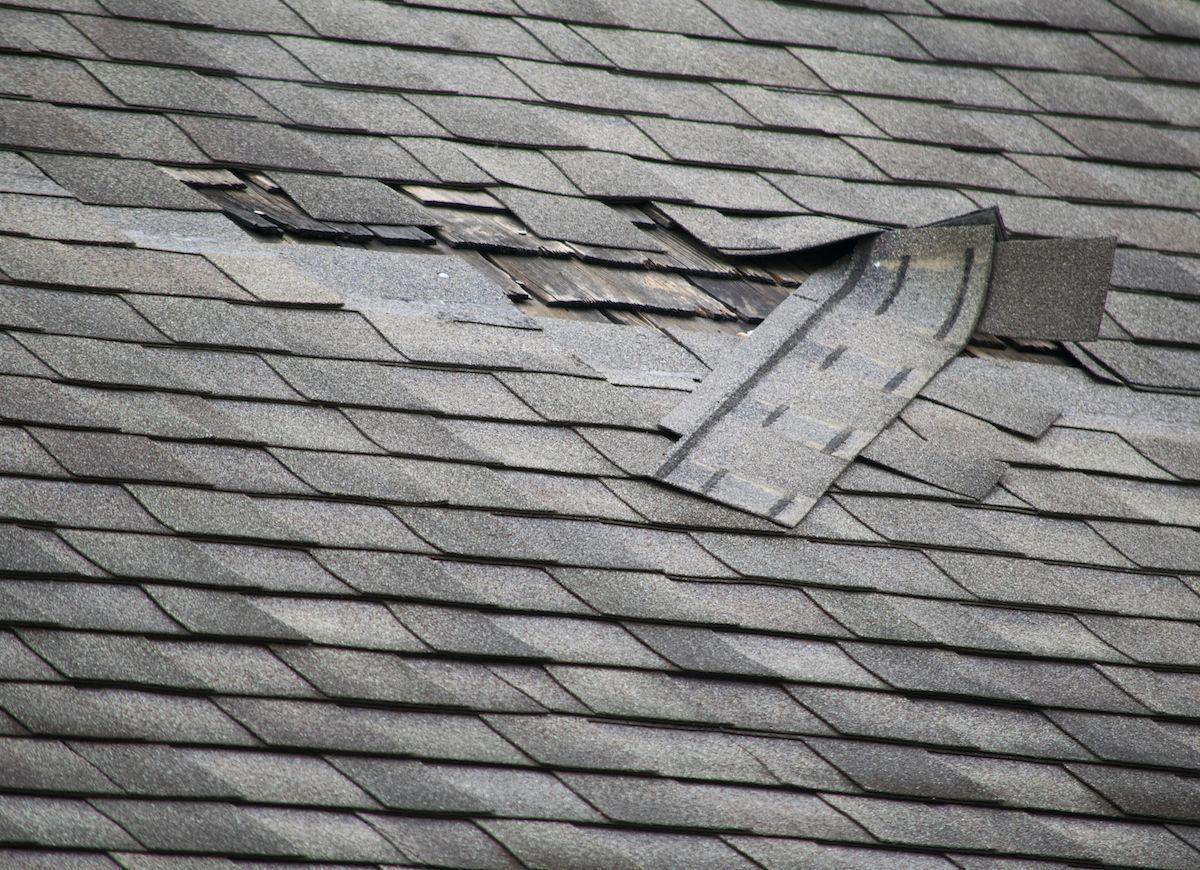 Green Roofs And Great Savings Roof Repair Leaky Roof Roof Leak Repair