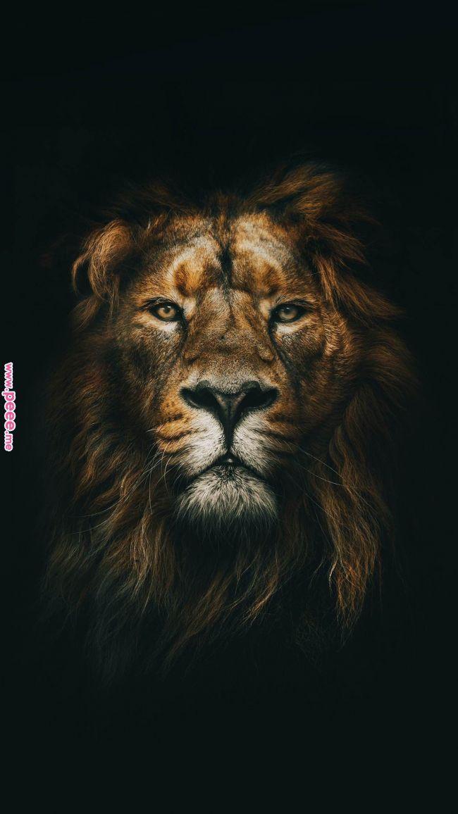 Phone Wallpaper Wallpaper Pinterest Lion Animals And