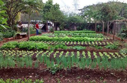 Hortas Comunitárias Urbanas na periferia de SP ampliam acesso a orgânicos a baixo custo!!!  :)