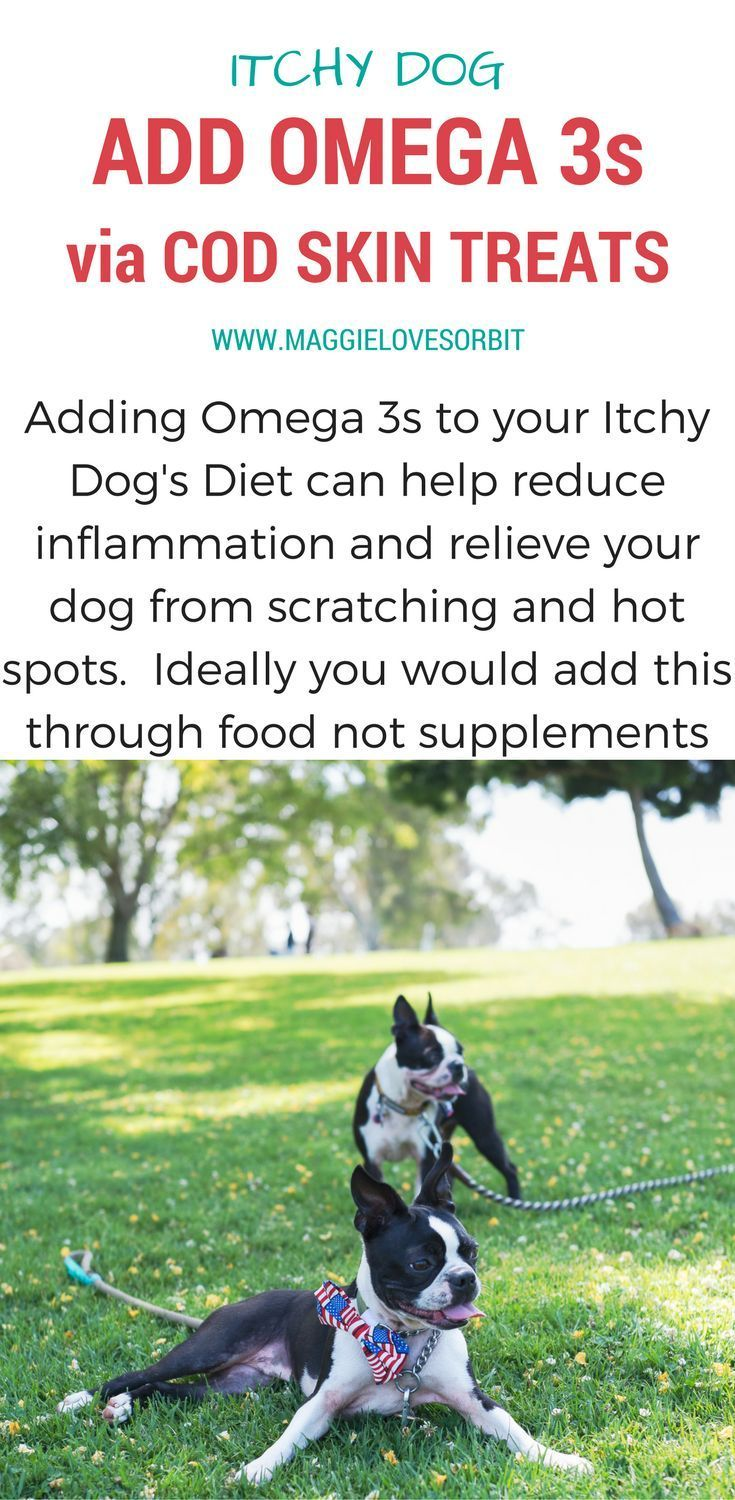 Open Farm Dehydrated Cod Skins Dog Treats Review Itchy