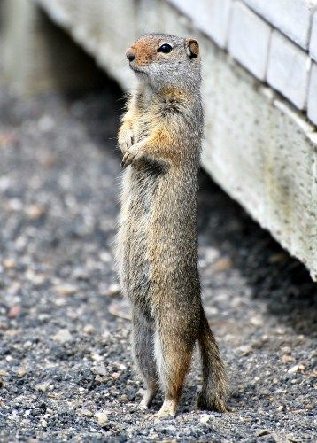 A very humanlike squirrel! Squirrel, Cute squirrel