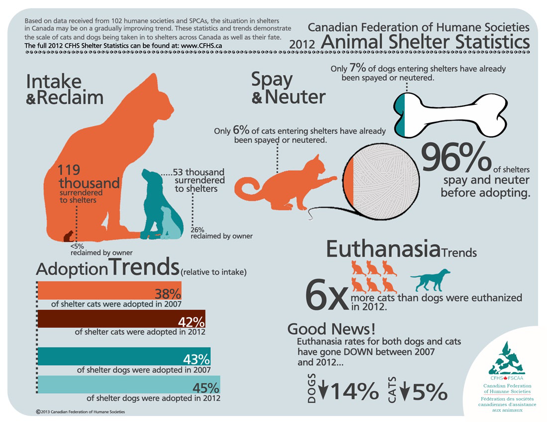 Animal Shelter Statistics Animal Shelter Canadian Animals Animal Infographic