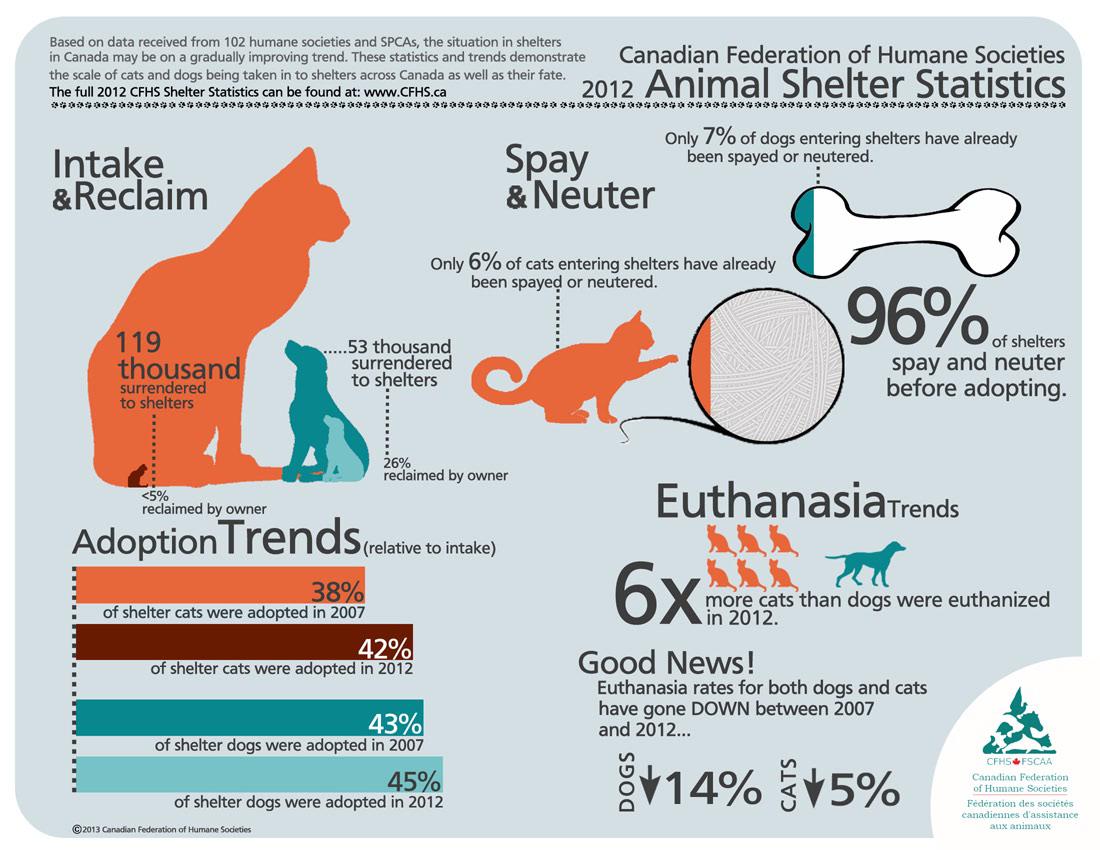 Animal Shelter Statistics Animal shelter, Canadian