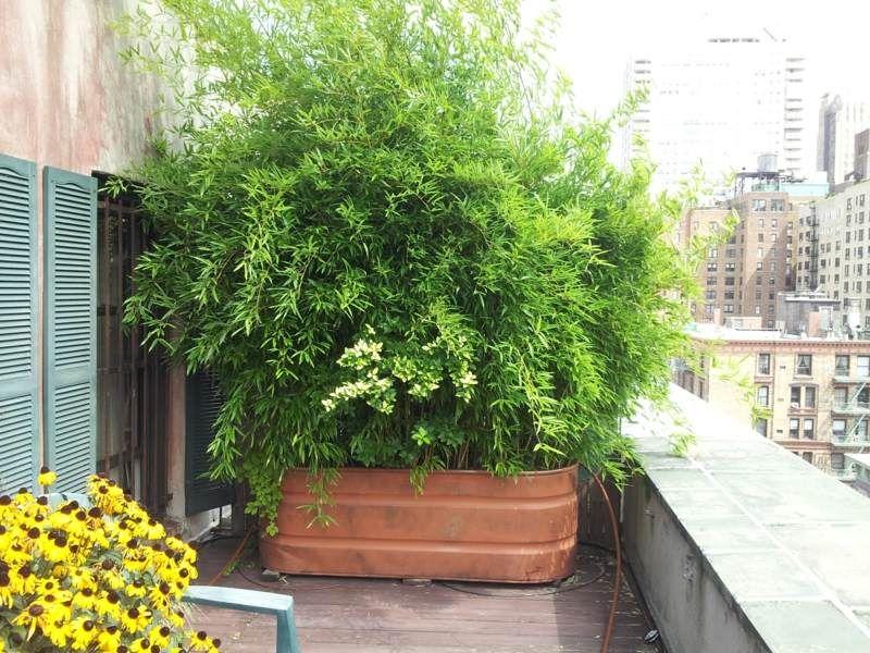 bambus im k bel als sichtschutz auf einem balkon g rtnern pinterest garten terrasse und. Black Bedroom Furniture Sets. Home Design Ideas
