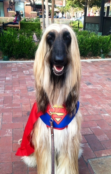 Please vote for this entry in It's an EARTH RATHED™ Halloween Pet Costume Photo Contest!!