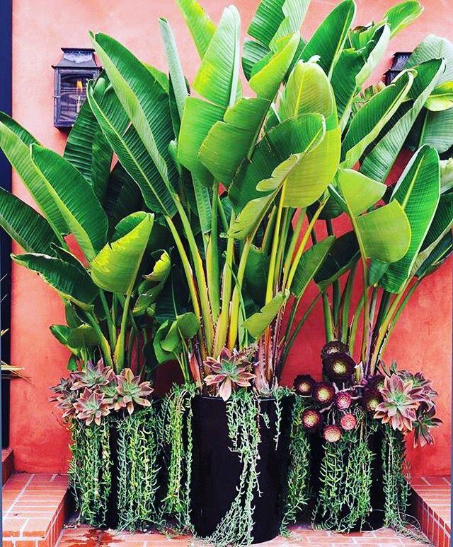 Lush palms, low maintenance   Out Dorsey   Pinterest   LUSH, Palm ...