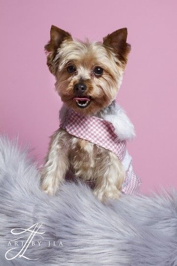 Sophie Is Available For Adoption On Allpaws Com View And Share Sophie S Profile And Help Her Find A Home With Images Dog Adoption Dogs Yorkshire Terrier Dog