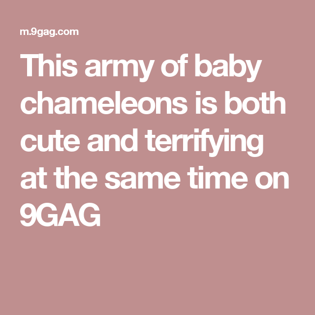 This army of baby chameleons is both cute and terrifying at the same time on 9GAG