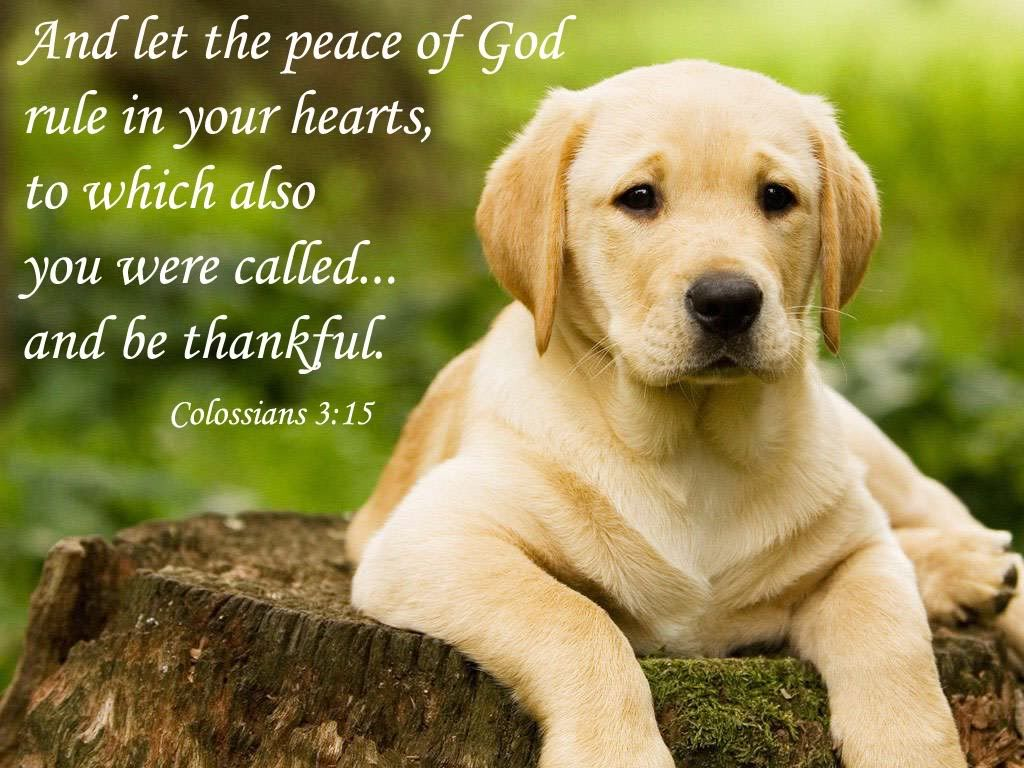 Animals Widescreen Wallpaper Animal Jpg Photo This Photo Was Uploaded By Bible Quoted Pics Find Other Animals Widescree Labrador Retriever Labrador Lab Dogs