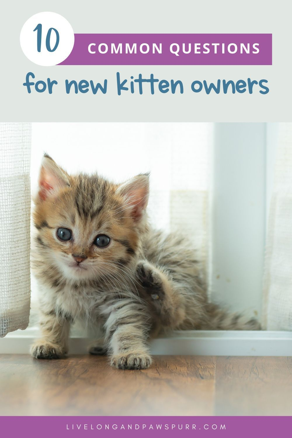 10 Common Questions For New Kitten Owners Live Long And Pawspurr In 2020 Cat Advice Kitten Cat Care