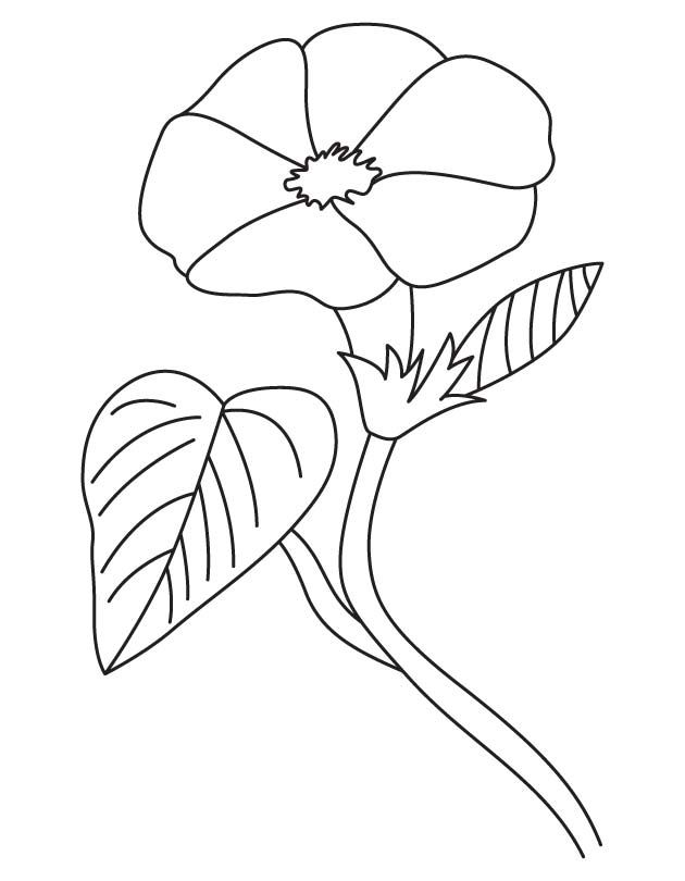 Open morning glory coloring page