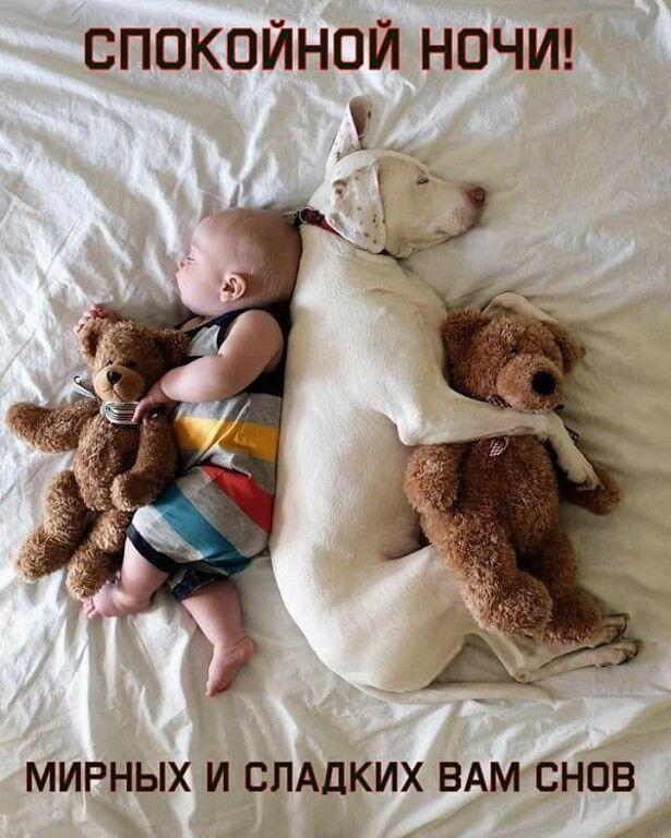 СПОКОЙНОЙ НОЧИ! 💤🎠 🌃 🎠💤 СЛАДКИХ СНОВ! in 2020 | Dogs and ...