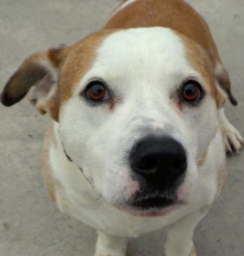 Adopt 26 Ren Adopted On Pets Animals Pets Hound Breeds
