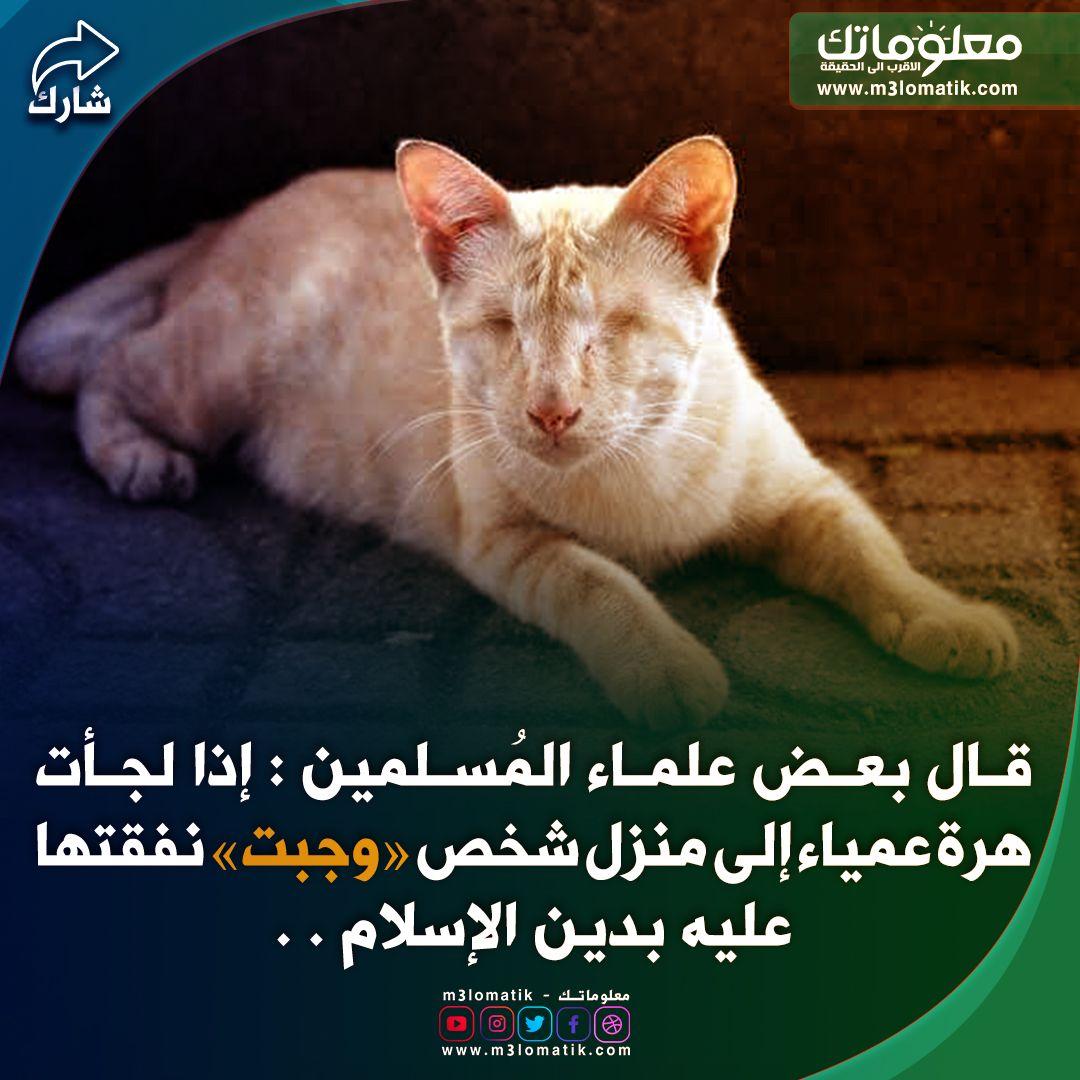 قطة عمياء Cats Animals