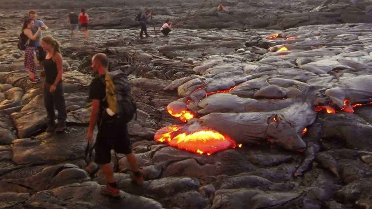 Hawaiian Sights & Animals