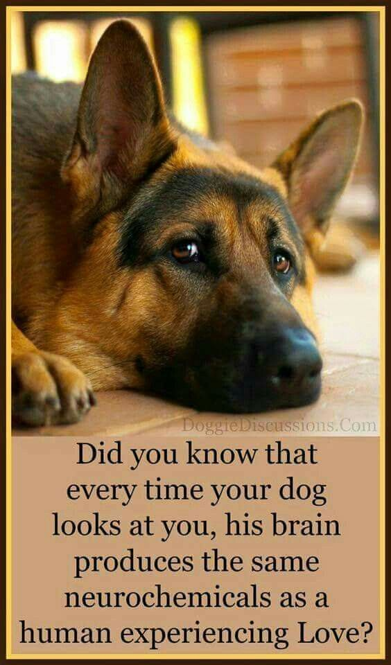 Tips On How To Train Your Dog German Shepherd German Shepherd Dogs