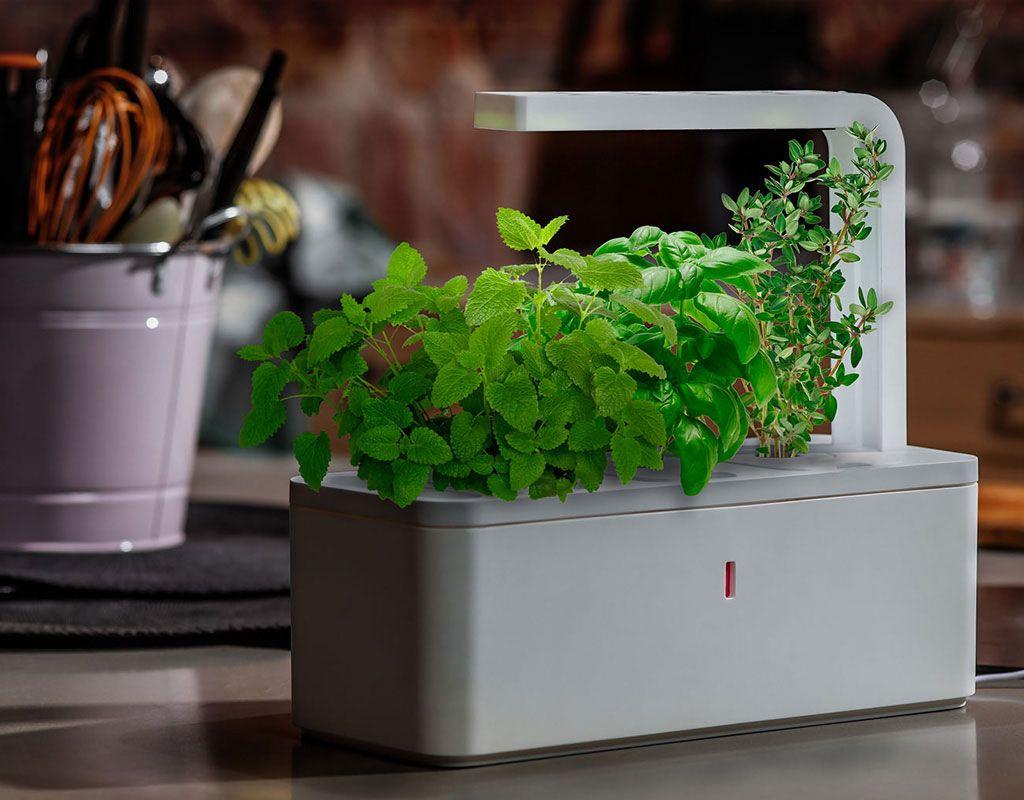 Click Grow Smartpots Gear Hungry Smart Garden Herbs 400 x 300