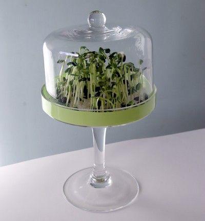 10 idee per coltivare i germogli senza comprare un ...
