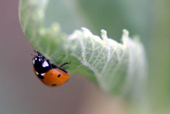 The Best Snacking Is Always On The Underside Lady Bug Lady Bug