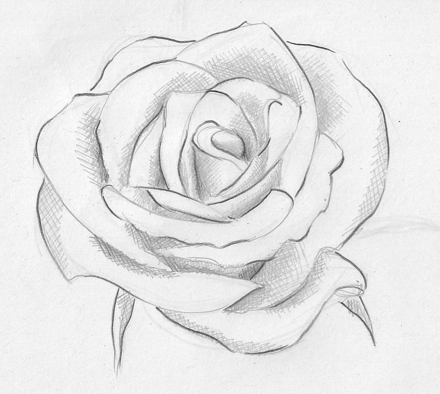 Rose With Images Roses Drawing Flower Sketch Images Rose