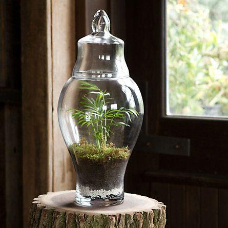 Love this terrarium jar!