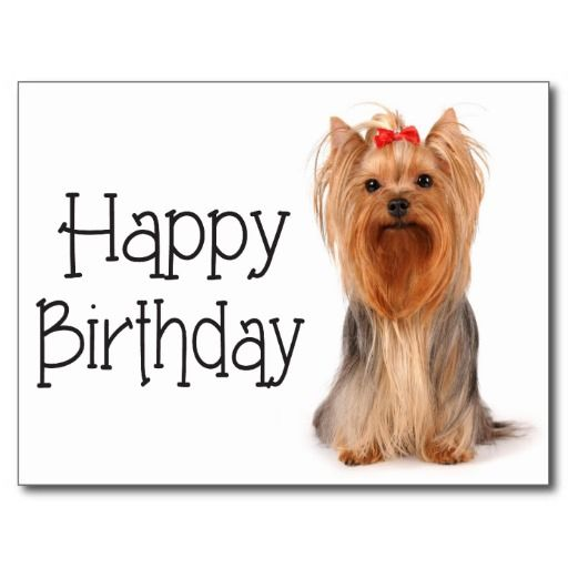 Yorkie Terrier Big Birthday Sis Happy