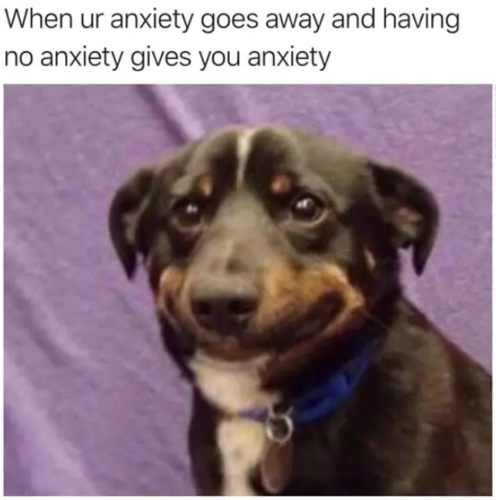 31 Memes de perros graciosos que harán tu día 31 Memes de perros graciosos que harán tu día