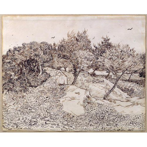 The Olive Trees By Vincent Van Gogh Art Print On Canvas Magnolia Box