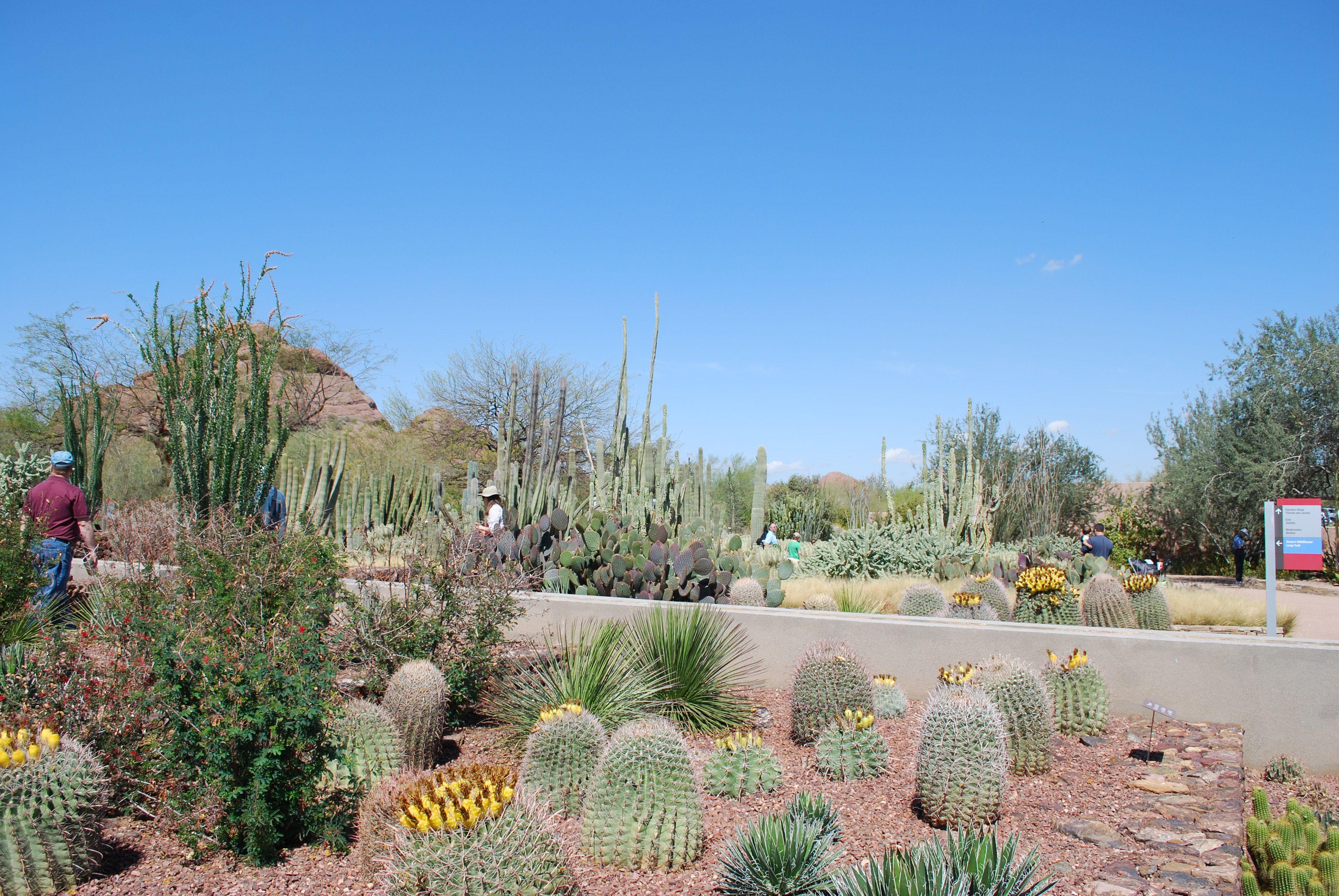 Desert Botanical Garden in Phoenix, Arizona Desert