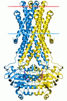 ATP-binding cassette transporter - Wikipedia, the free encyclopedia