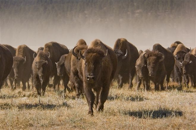 Badlands National Park in South Dakota - South Dakota Tourism