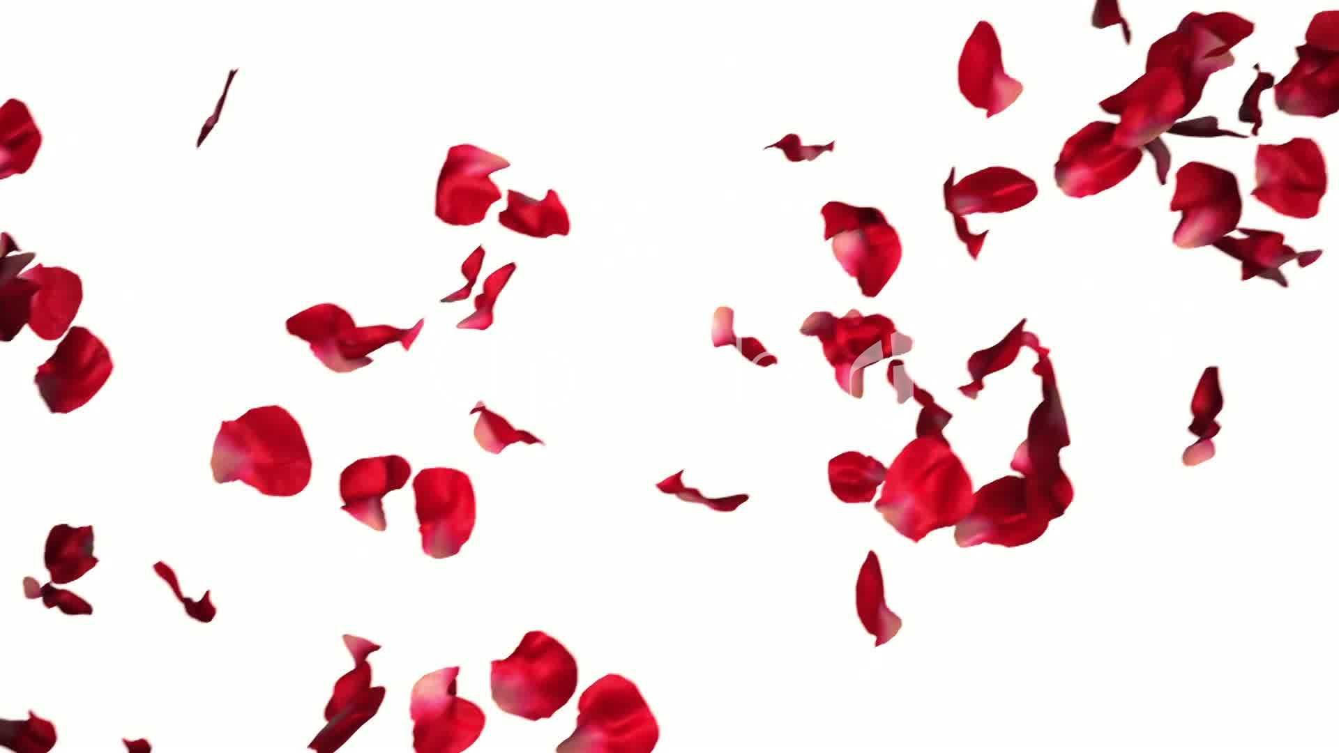 red falling petals pictures