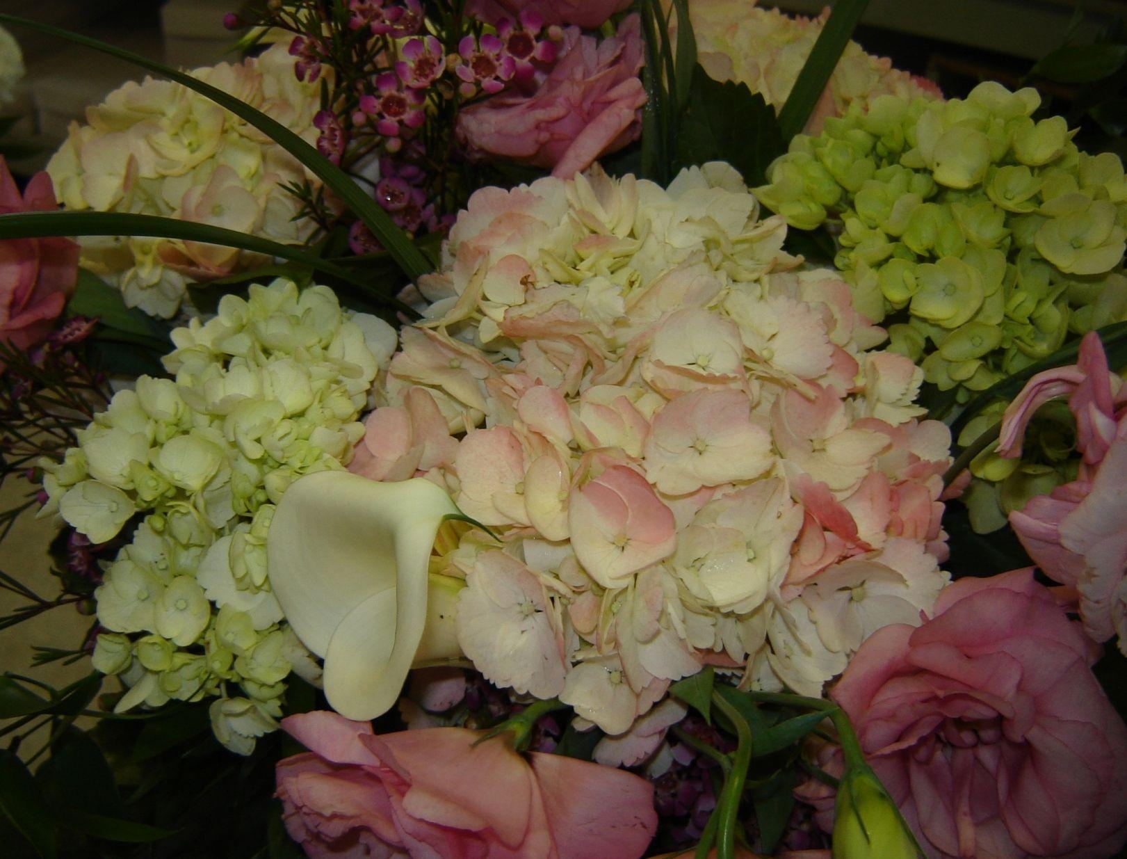 Hydrangea...such a gorgeous flower.