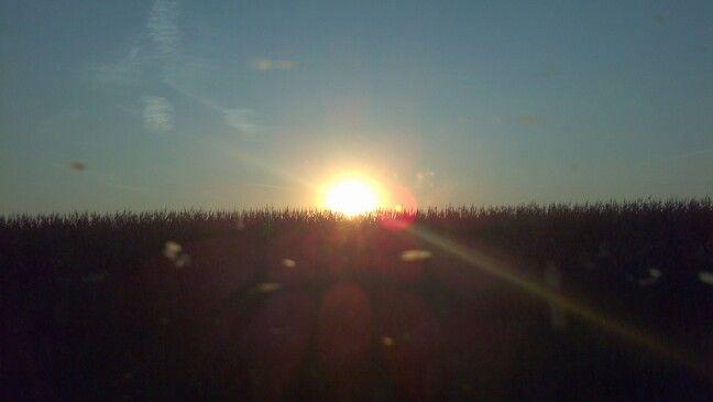 Setting sun behind a corn field.
