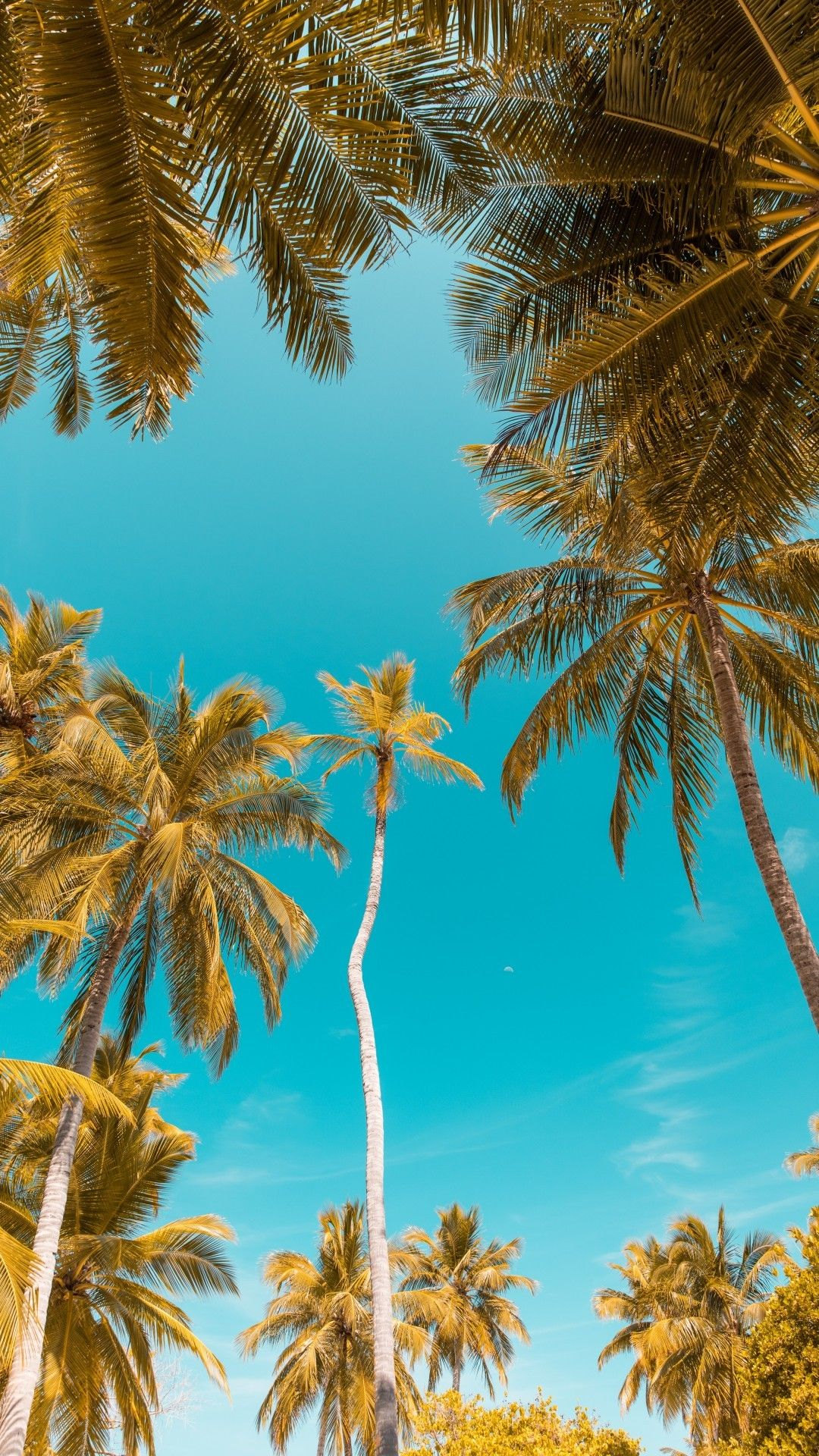 Download 1080x1920 Clear Sky, Palm Trees, Tropical