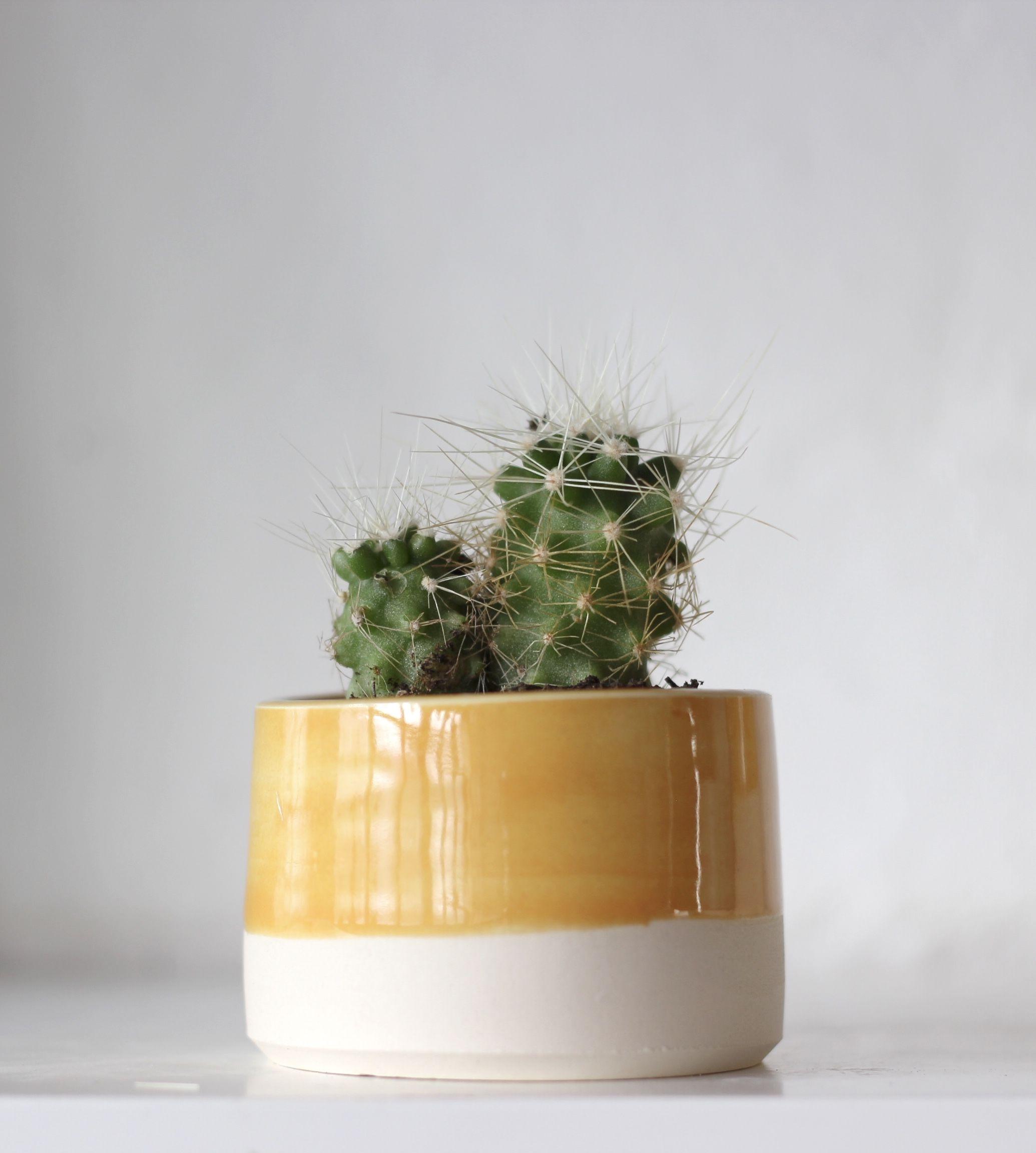 Small Mustard Plant Pot By Fich Ceramics Instagram Fichceramics