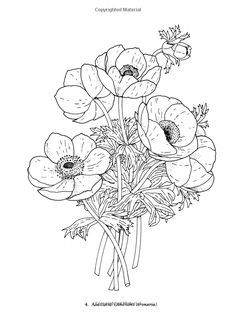 Redoute Flowers Coloring Book Dover Nature Charlene Tarbox 9780486400556