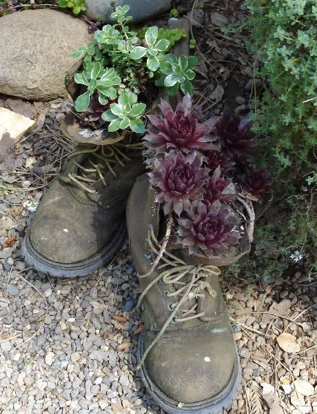 Shoes By Cin Dee Old Boots Succulent Garden Design Hens And Chicks