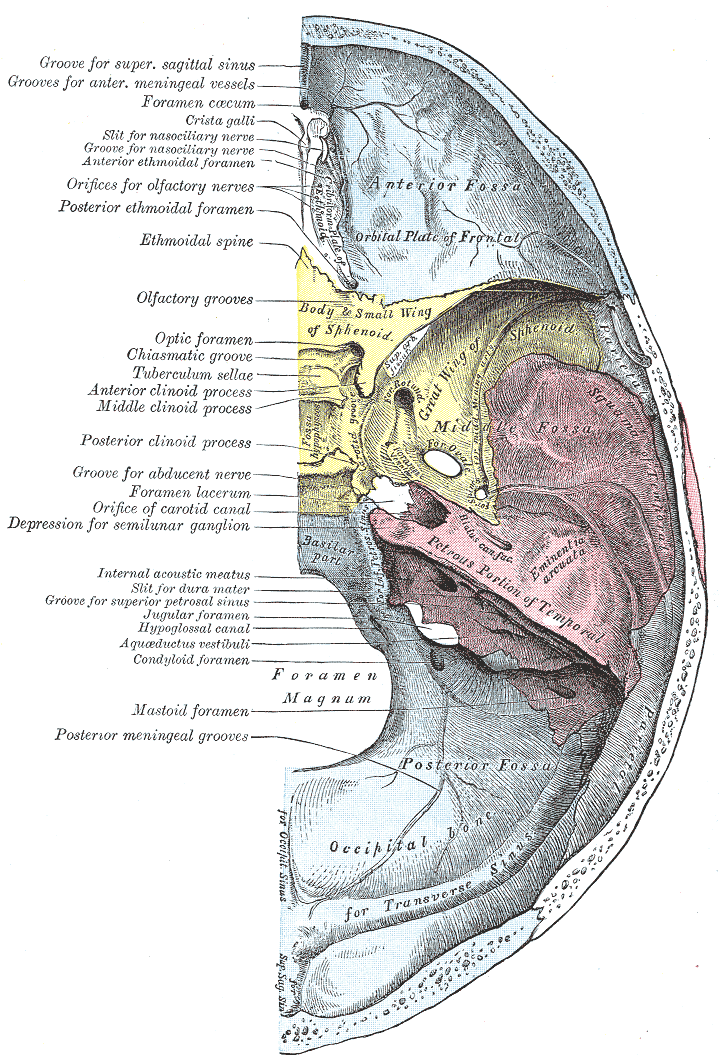 Gray193 - List of foramina of the human body - Wikipedia, the free ...