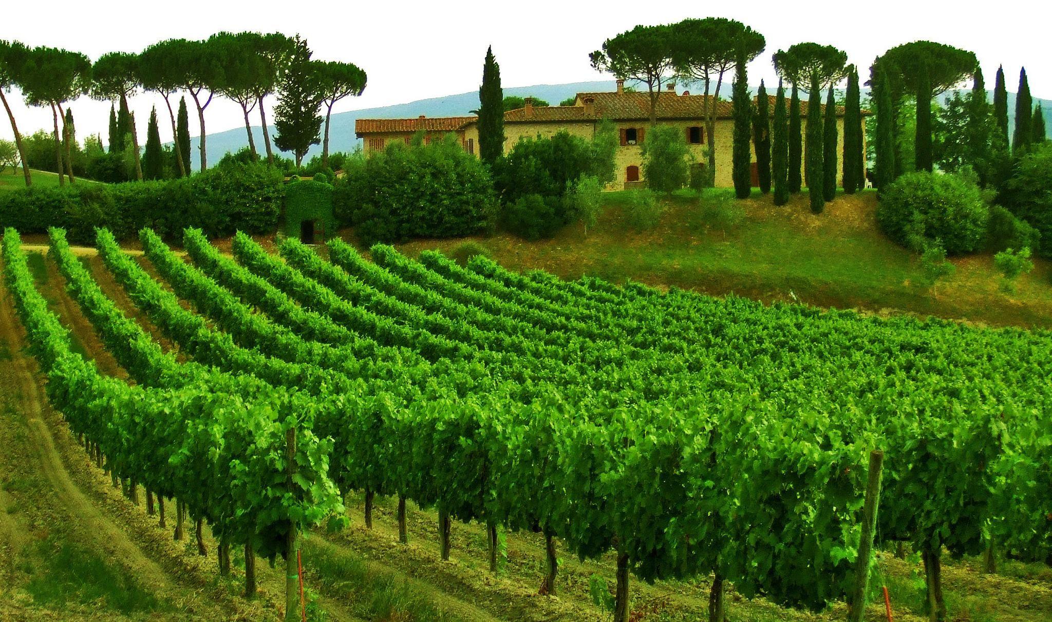 фотожурналистом можно плантации в италии фото интересно