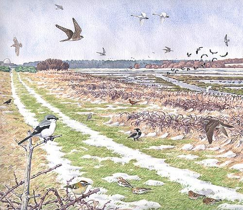 Field with birds