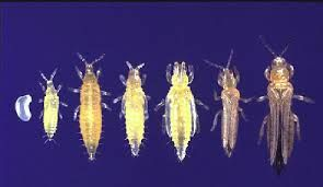 34++ Minuscule insecte blanc cuisine ideas in 2021